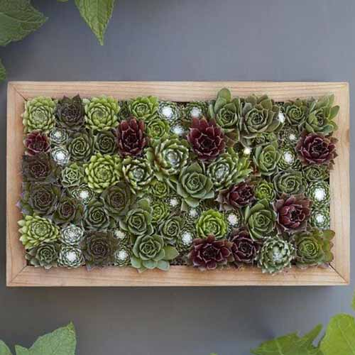 A close up square image of a wooden succulent planter filled with a selection of plants set on a gray surface.