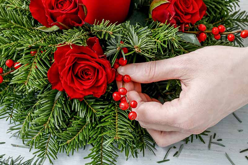 A close up horizontal image of a hand from the right of the frame using roses and bright red berries to create an evergreen holiday decoration.