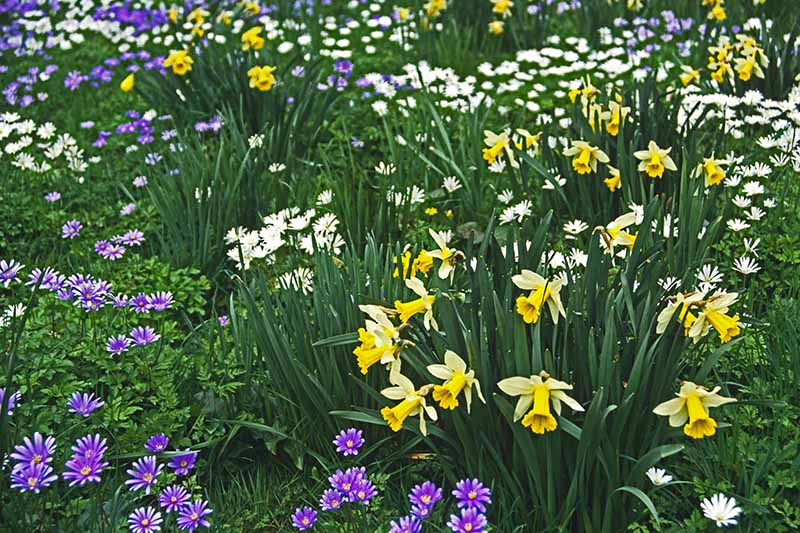 A horizontal image of a variety of spring-blooming flowers growing in the garden.