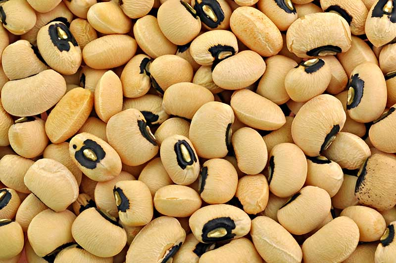 A close up background image of dried black-eyed peas.
