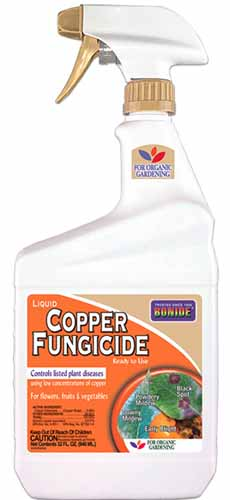 A close up vertical image of a spray bottle containing Bonide Copper Fungicide pictured on a white background.