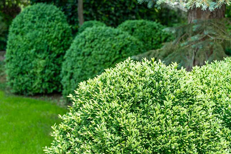 A horizontal image of a variety of shrubs growing in the garden under a large tree pictured in light sunshine.