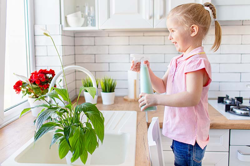 A close up horizontal image of a girl to the right of the frame misting a peace lily plant set in a kitchen sink with red flowers in the background.
