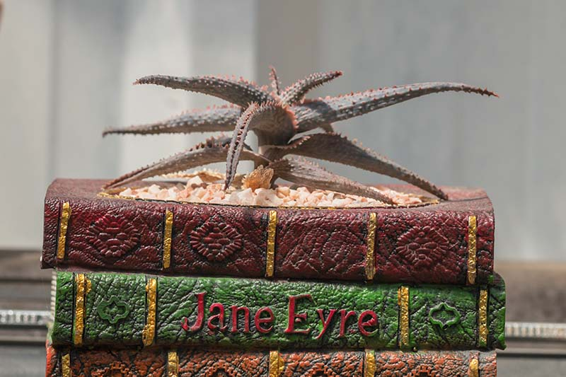 A close up horizontal image of a small 'Christmas Carol' aloe growing in a decorative container made to look like a pile of books, pictured on a soft focus background.