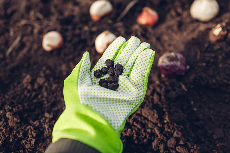 A close up horizontal image of a gloved hand holding small seeds for planting in the garden. In the background is dark, rich soil.