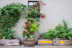 Potted Bushes: How to Grow Shrubs in Containers