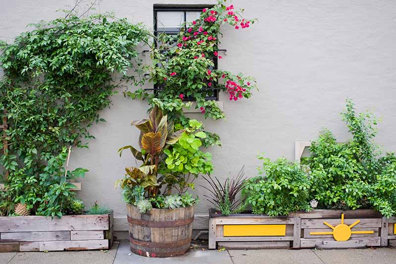 A horizontal image of a variety of plants growing in different containers and pots outside a residence.