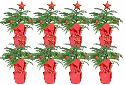 A close up horizontal image of eight small Christmas trees in decorative packaging pictured on a white background.
