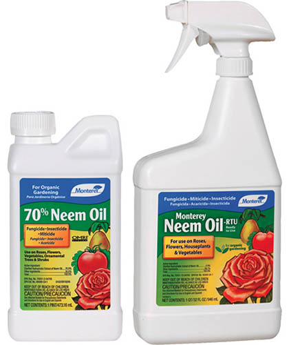 A close up square image of two plastic bottles of Monterey Neem Oil pictured on a white background.