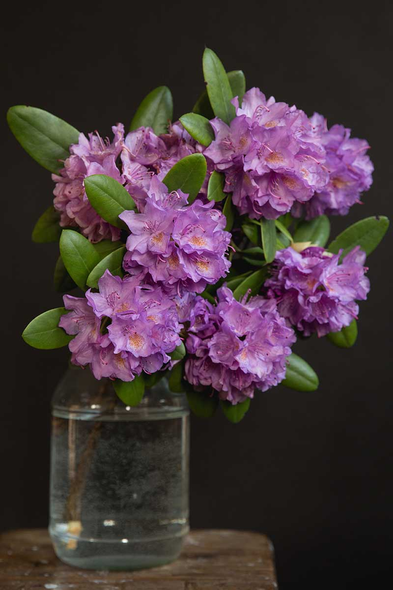 A close up vertical image of purple cut flowers in a small glass vase pictured on a dark background.