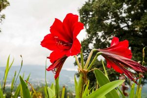 How to Spot Southern Blight Disease in Amaryllis Plants