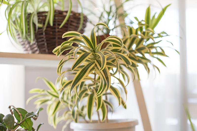 A close up horizontal image of various houseplants in pots and hanging containers pictured on a soft focus background.