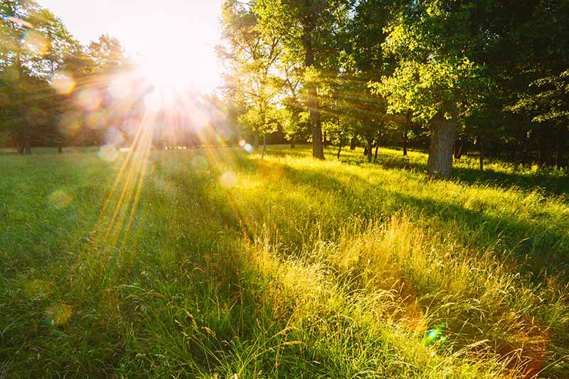 A horizontal image of a garden scene with a meadow and large trees and sunlight filtering through, casting shadows on the ground.