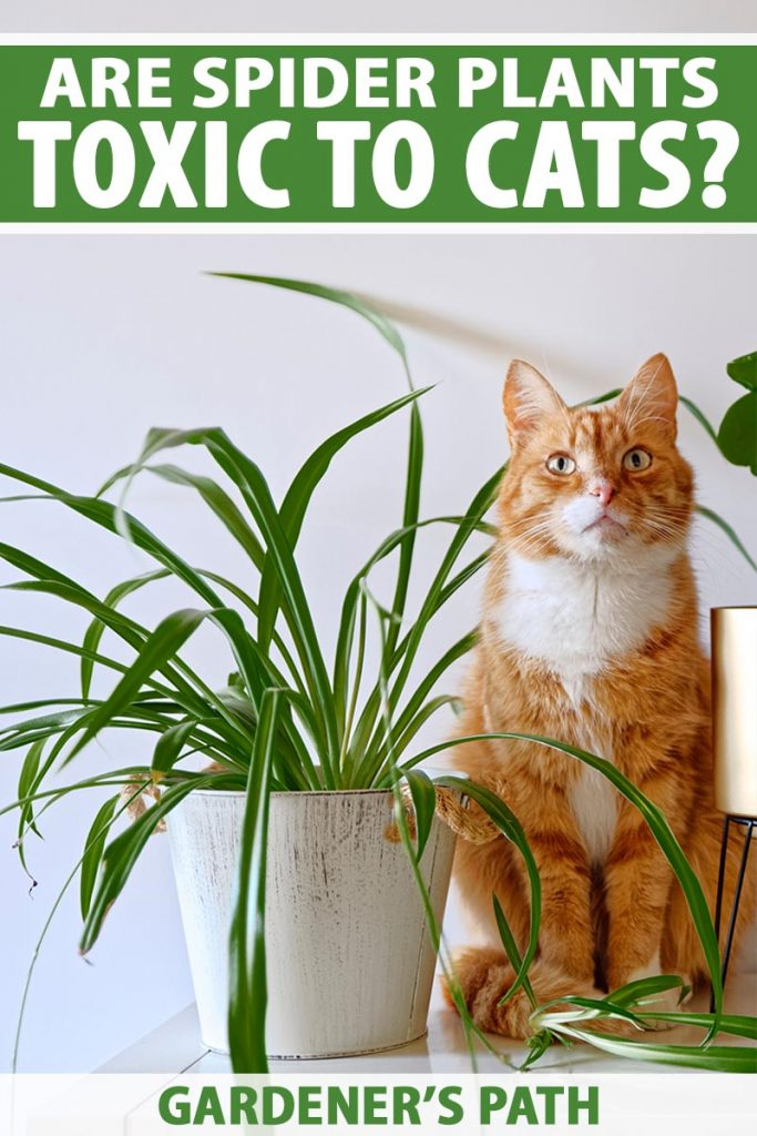 A close up vertical image of a large ginger tom sitting next to a houseplant looking suspiciously innocent. To the top and bottom of the frame is green and white printed text.