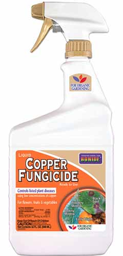 A close up vertical image of Bonide Liqud Copper Fungicide spray bottle pictured on a white background.