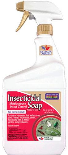 A close up vertical image of a spray bottle of Bonide Insecticidal Soap pictured on a white background.