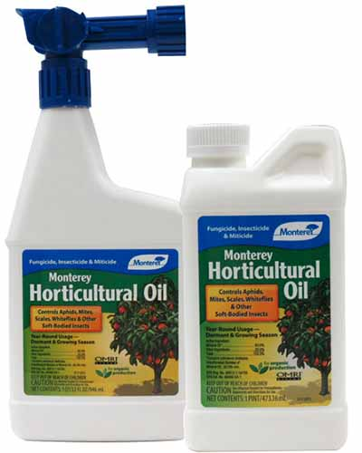 A close up square image of two bottles of Monterey horticultural oil pictured on a white background.