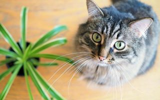 A close up horizontal image of a dark gray tabby with wide green eyes looking up at the camera with a guilty expression.