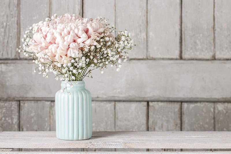 A close up horizontal image of a pale blue vase with pink and white flowers set on a wooden surface.