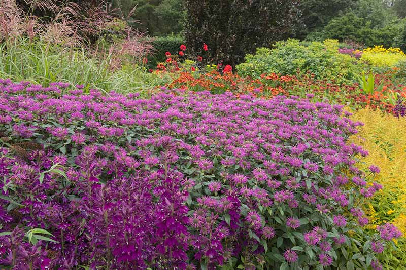 A horizontal image of a wildflower garden in full bloom.