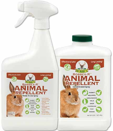 A close up square image of two plastic bottles of Bobbex-R Animal Repellent pictured on a white background.