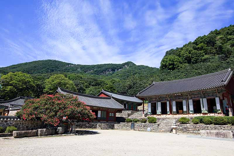 A horizontal image of a large flowering shrubs growing outside a temple with mountains and blue sky in the background.