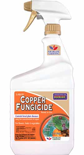 A close up vertical image of a ready to spray bottle of Bonide Copper Fungicide pictured on a white background.