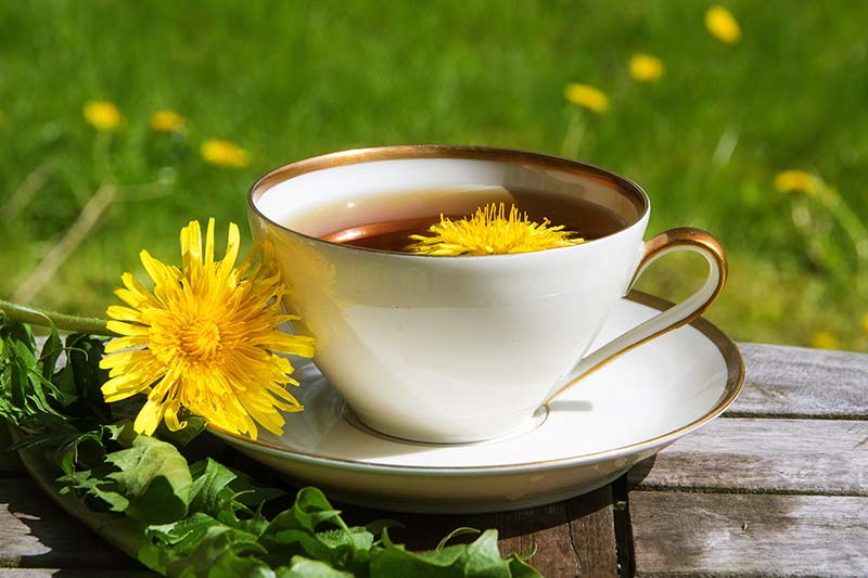 A close up horizontal image of a cup of dandelion tea set on a wooden surface with a fresh flower set on the saucer, pictured on a soft focus background.