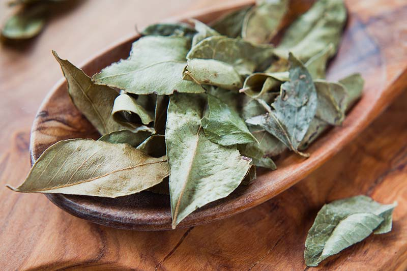 A close up horizontal image of dried curry leaves in a wooden bowl.