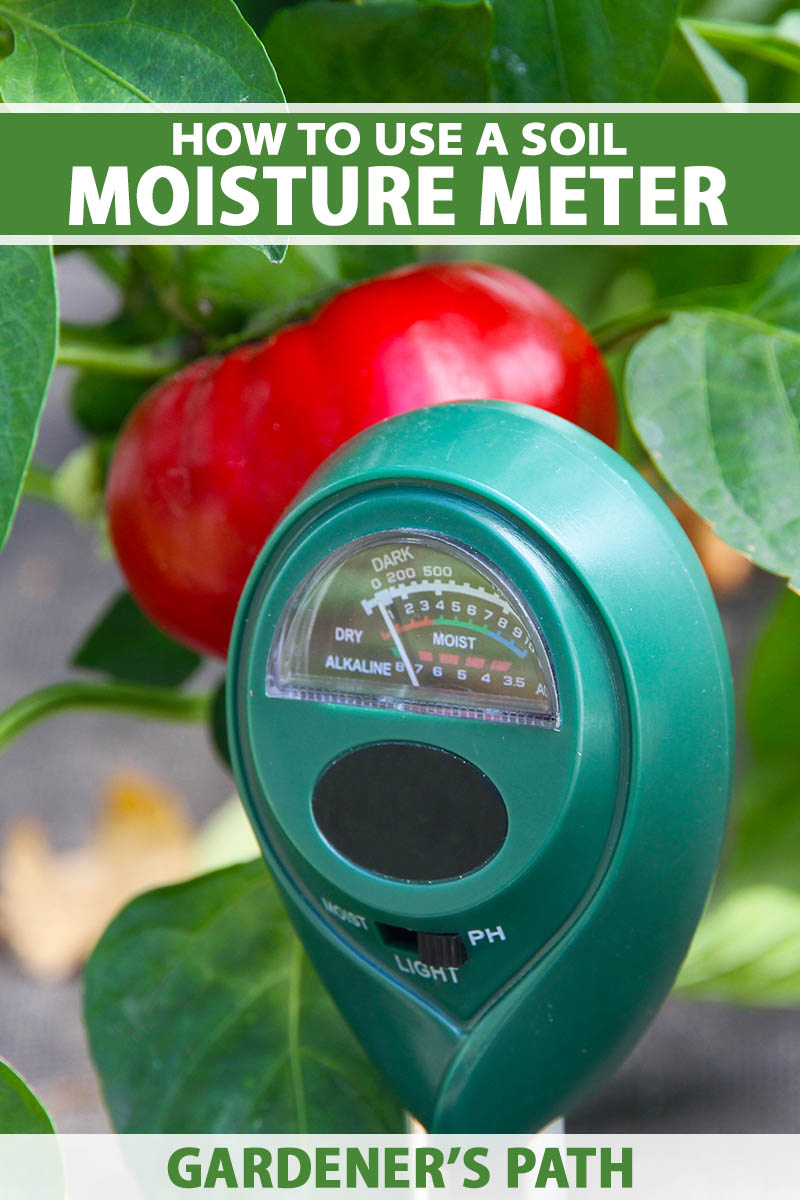 A close up vertical image of a soil moisture sensor with a ripe tomato and foliage in soft focus in the background.