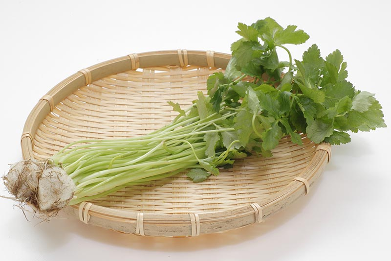 A close up horizontal image of freshly harvested Cryptotaenia japonica in a bunch on a wicker tray pictured on a white background.