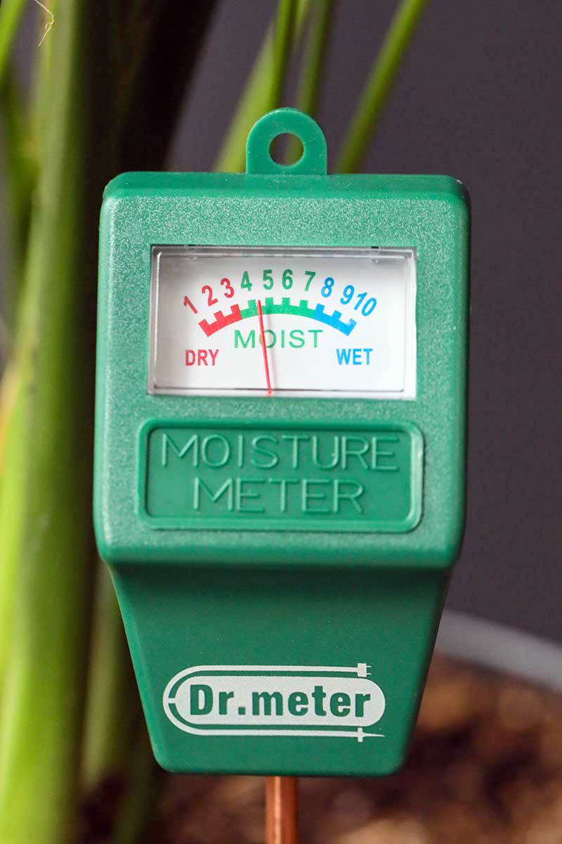 A close up vertical image of a hygrometer taking a reading of the water level in the potting medium of a houseplant pictured on a soft focus background.