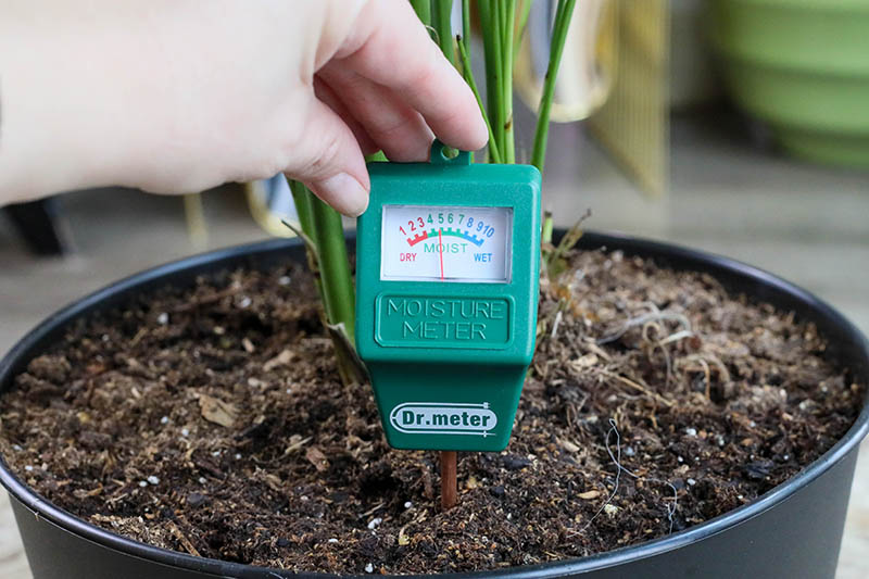 A close up horizontal image of a hand from the left of the frame taking a moisture reading from a hygrometer set in the potting mix of a houseplant.