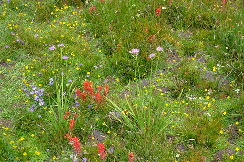 A horizontal image of a wildflower meadow with red, pink, and yellow flowers.
