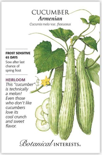 A close up vertical image of a seed packet showing an illustration of an Armenian cucumber to the right of the frame with printed text to the top, bottom, and the left.