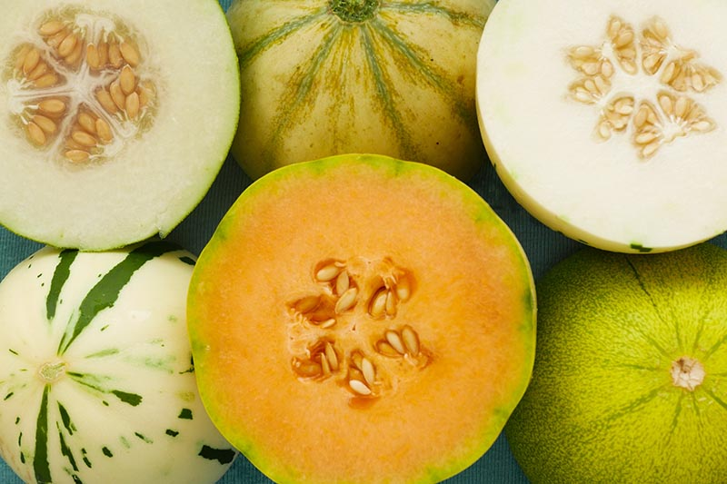 A top down horizontal image of different melon varieties, whole and cut set on a white surface.
