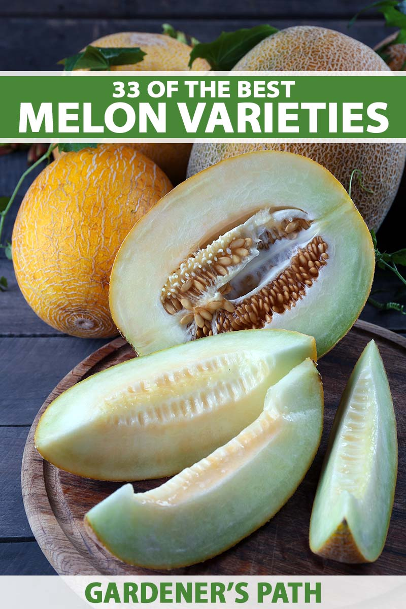 A close up vertical image of cut and whole melons set on a wooden surface. To the top and bottom of the frame is green and white printed text.