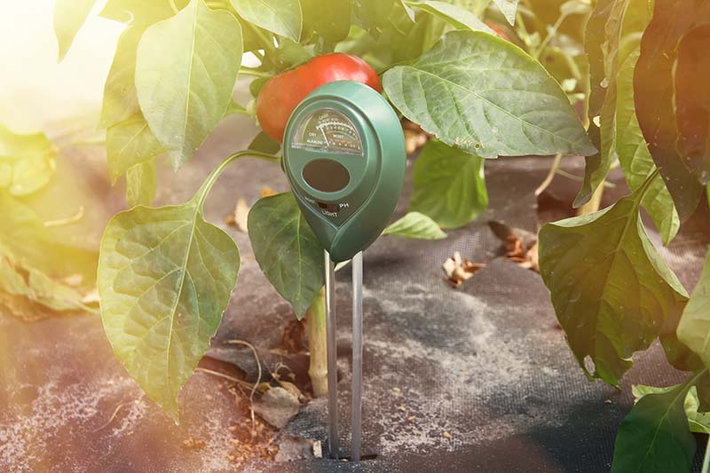 A close up horizontal image of a soil moisture meter set in the ground next to a tomato plant pictured on a soft focus background in light sunshine.