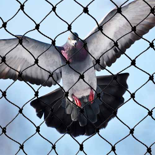A close up square image of a pigeon attempting to land on some netting pictured on a blue sky background.