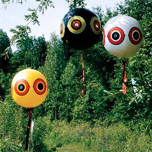 A close up square image of three bizarre balloons hanging from trees in the garden.