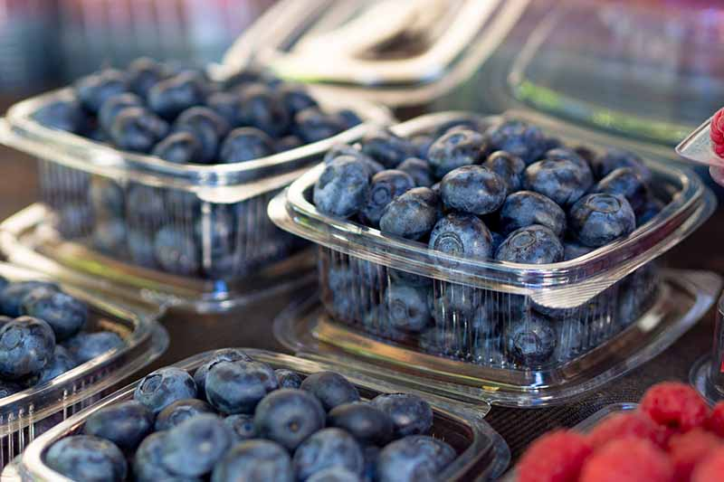 A close up horizontal image of ripe blueberries in plastic containers at a grocery store.