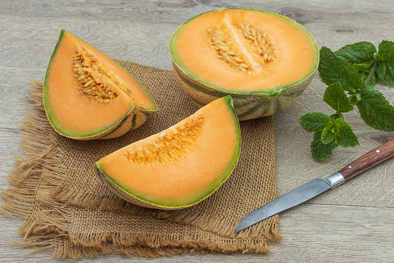 A close up horizontal image of a cantaloupe sliced in half and quarters set on a wooden surface.