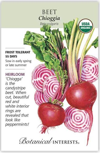 A close up vertical image of a seed packet showing an illustration of Chioggia beets to the right of the frame with printed text to the top, bottom, and the left.