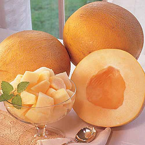 A close up square image of a 'Creme de la Creme' melon cut in half with pieces displayed in a glass bowl. In the background are two whole fruits with orange skin.