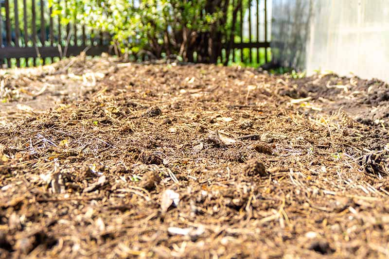 A horizontal image of a fallow section of the garden covered in organic mulch pictured in bright sunshine.