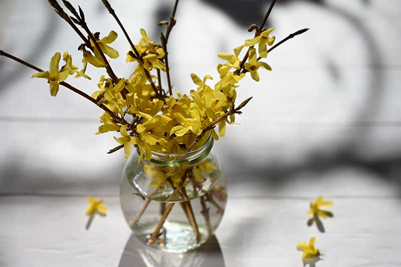 A close up horizontal image of a small glass vase et on a wooden table with sprigs of yellow flowers pictured on a soft focus background.