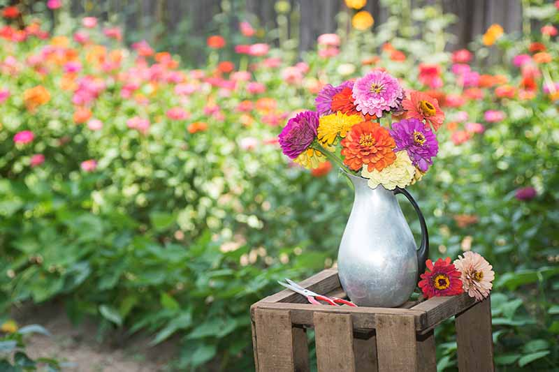 A horizontal image of a metal vase filled with brightly colored cut flowers set on a wooden box with a garden border in soft focus in the background.