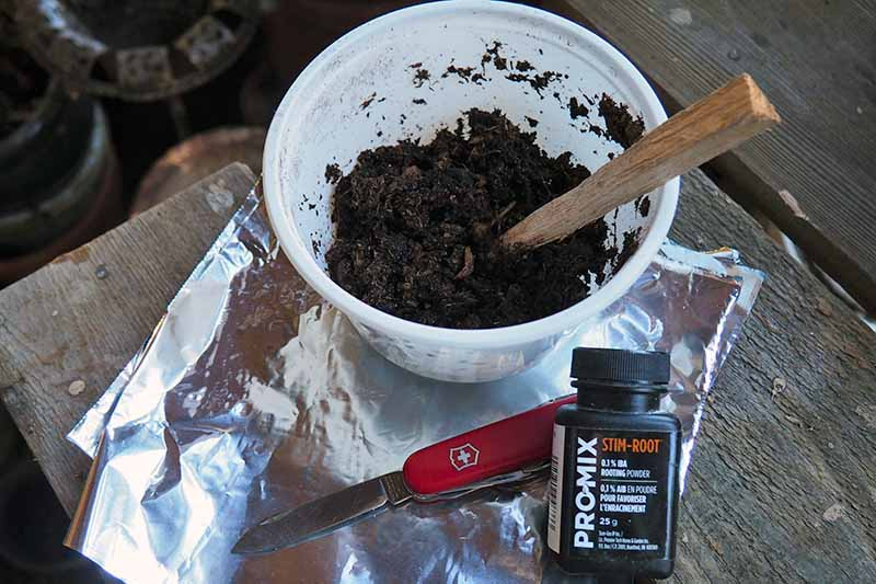 A horizontal image of a small white pot containing peat, a gardening knife, rooting hormone, and tin foil set on a wooden surface ready for air layering.