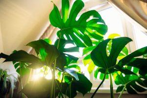 How to Bottom Water Houseplants