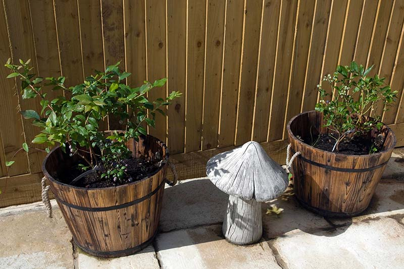 A close up horizontal image of two wooden planters and an ornamental toadstool on a patio with a wooden fence in the background.